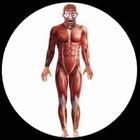 Anatomie Kostüm Muskeln - Bodysuit - Anatomy Man