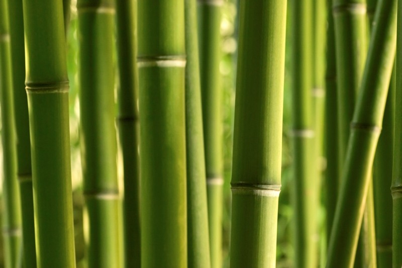 fototapete bambus vlies tapete fototapete natur tapeten bei retro. Black Bedroom Furniture Sets. Home Design Ideas