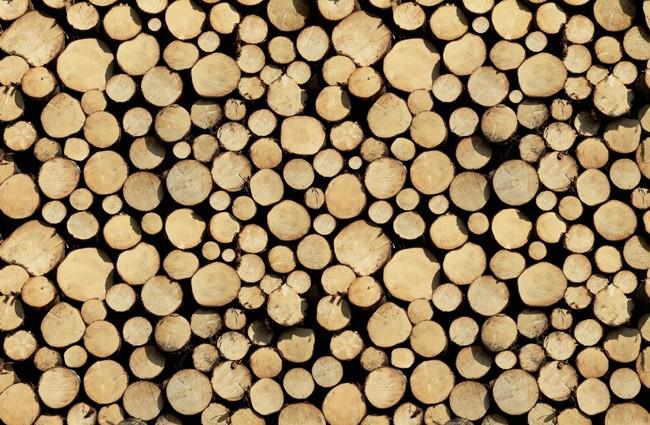 fototapete baumst mme vlies stock of wood tapete. Black Bedroom Furniture Sets. Home Design Ideas